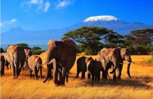elefantes en el kilimandjaro