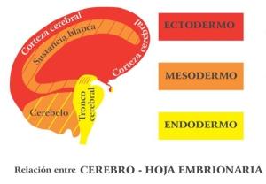 capasembrionarias1